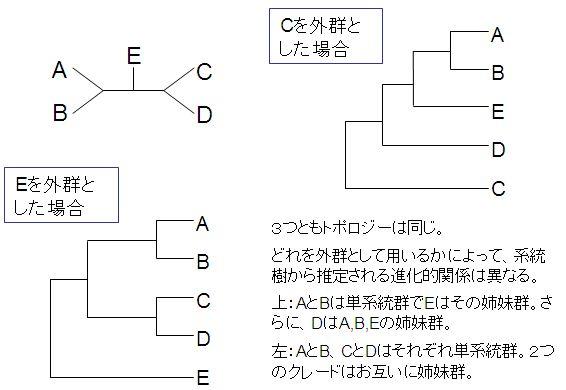 書き方 系統 樹